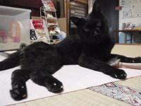 猫 ホテル 19歳のザジちゃん