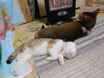 猫カフェ みーこ アビ&スコ 小ちゃん&みんちゃん
