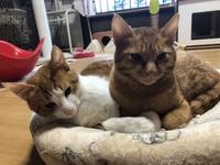猫カフェみーこ猫譲渡会