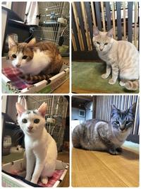 里親募集の猫たち