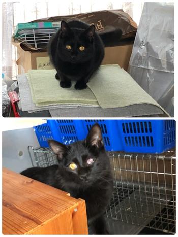 黒猫兄妹は里親募集もうすぐ終了