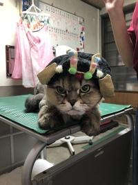 和歌山市猫カフェみーこで猫美容 レオナルド君