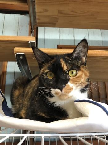 和歌山市猫カフェみーこで毎日里親募集