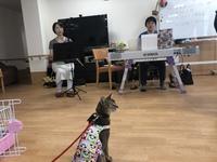 和歌山市猫カフェみーこの施設ふれ愛訪問でした
