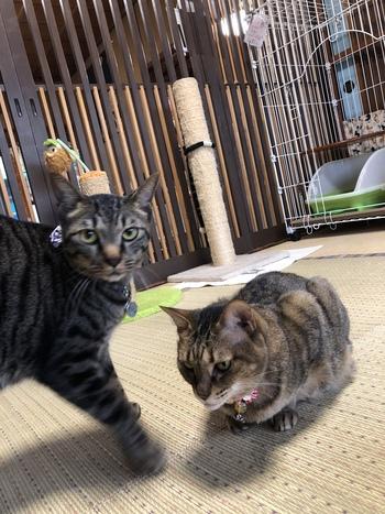 #猫ホテル サラちゃん&にぃちゃん