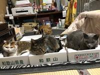 #猫夢空間気ままなみーこ
