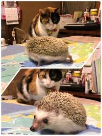 イベント・里親・お知らせ#猫カフェみーこ