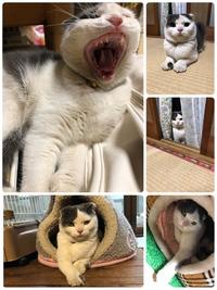 #猫カフェみーこ かわちゃんおめでとう㊗️