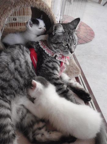 猫の里親システムの案内