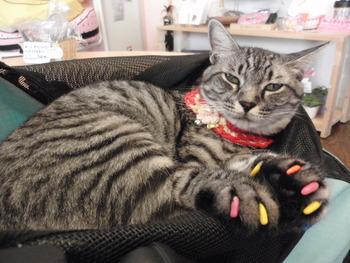 猫 ネイルキャップ