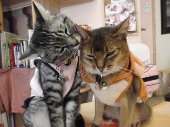 猫カフェみーこ 案内