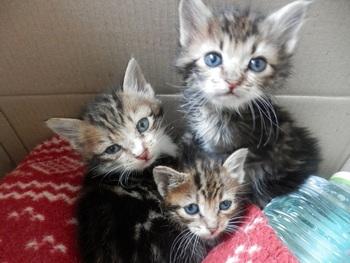 子猫が3匹♪