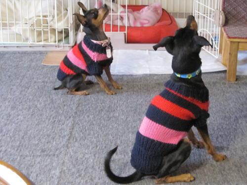 犬のセーター②