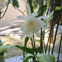 咲くやこの花館 1