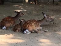 和歌山城動物園