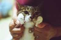 薬物依存症のホームレスを助けた野良猫