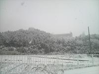 雪!雪!雪~!!
