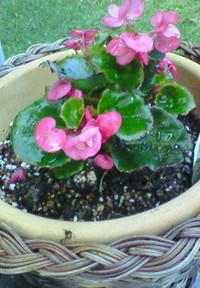 庭の鉢植え