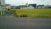 朝の帰りは  和佐道を 通ってきた