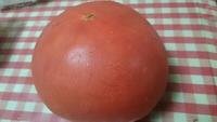 和佐の     大玉 トマト
