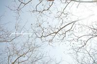 春光 2015/04/01 13:27:11