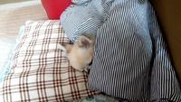 ムーちゃんの寝相