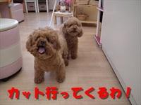 ☆トリミング中継☆