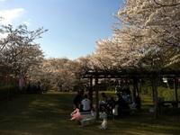 4/6(土)亀池公園でお花見BBQ