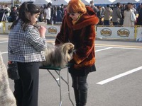 2011 FCI 中部インターナショナルドッグショー