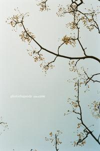 かわいい木