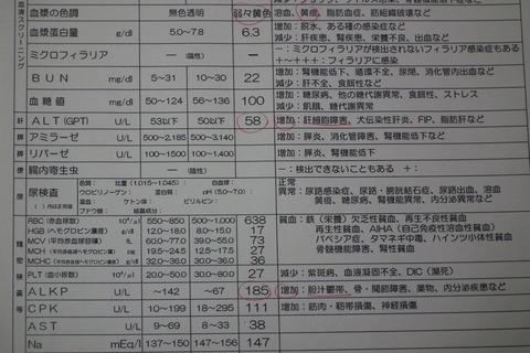 急性膵炎 かん太・・・・