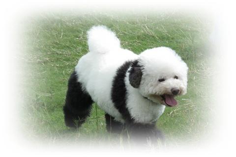パンダのジョージに!!!