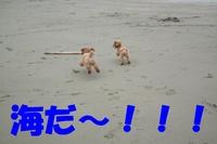 ♪海で大ハシャギ♪