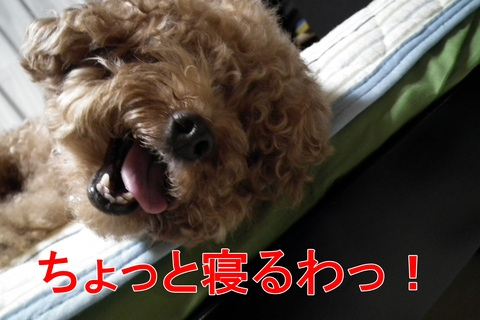 ぽんかん1日の行動!