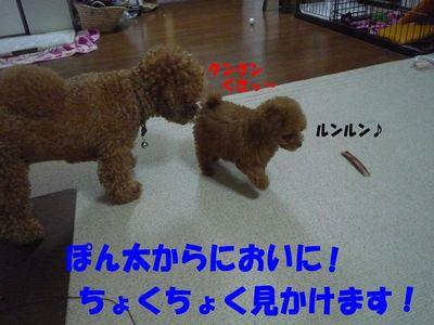 2ワン接近(@@)