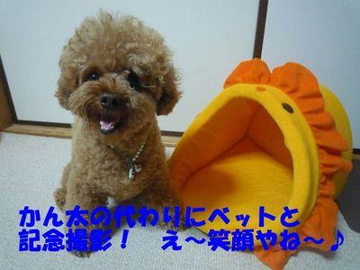 """""""ぽんかん!""""お揃いのお洋服♪"""