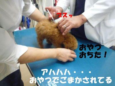 かん太予防接種で大変(><)