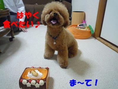 ぽん太2歳の小さ~いお誕生会☆