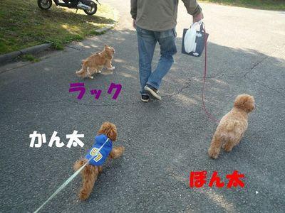 くっついてお散歩