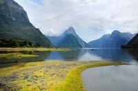 自然豊かな国ニュージーランドのドメイン!