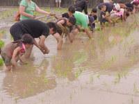 山東DE田んぼ 泥んこ遊びと田植え体験 募集