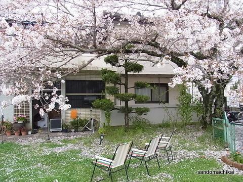 桜、満開、伊太祈曽駅前
