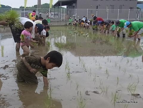 さんどDE田んぼ 泥んこ遊びと田植え