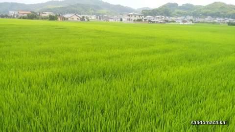 緑映える、山東