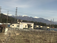 アルプス山脈が綺麗に見えていま…