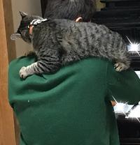夫も猫だった?