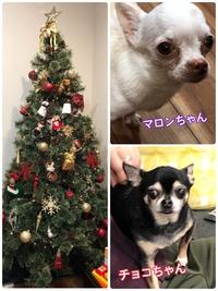 【大きなクリスマスツリーがキレ…
