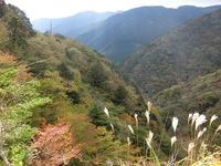 護摩壇山の紅葉とコメントのお知らせ