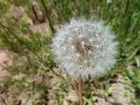 たった一輪の花が生きた証(あかし)