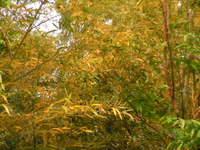 久保川と天王山の森を守る会